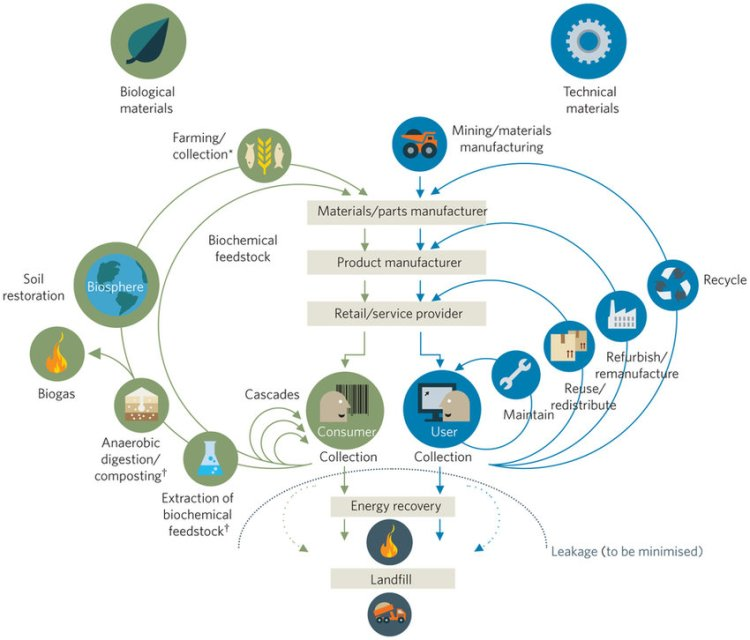 biological & technical lifecycles